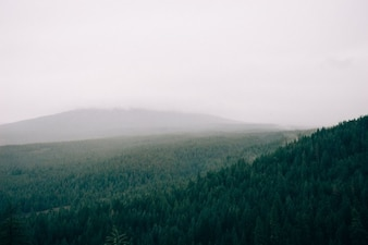 Into the hazy woods