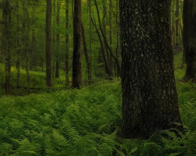 숲 속으로