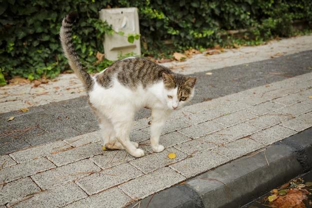발이 잘린 잘못된 고양이, 노숙자 고양이 재치 있는 나무 다리.