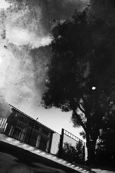 Inverted reflection of a street in a puddle