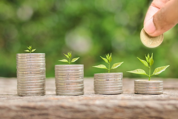 Investor hand hold and drop a gold coin and plant growing with savings money on photo blur cityscape on sunlight background business investment and saving money concept