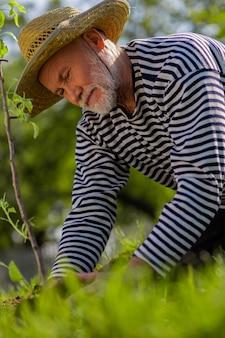 도금에 관여합니다. 나무 도금에 관여하는 밀짚 모자를 쓰고 수염 난 회색 머리 은퇴 한 남자