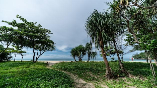Ipomoea pes-caprae on sand beach