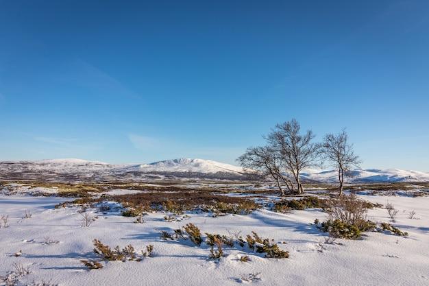 ノルウェーのドブレ山の山の前で白irの木と雪