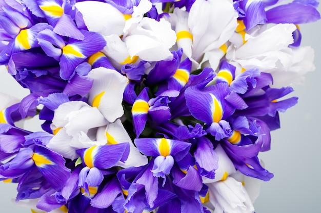 アイリスの花、春の花柄