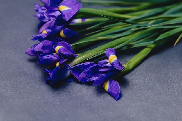 Irises on dark background in studio