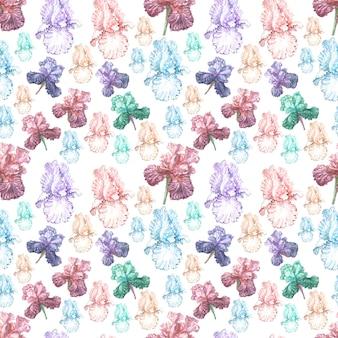 菖蒲の花春咲くイラストはがき背景スケッチ
