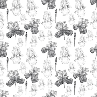 菖蒲の花春咲く水彩イラスト手描きはがき背景スケッチ