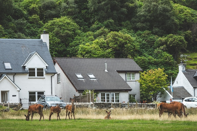 Irish countryside buildings surrounded by forest, wild animals. northern ireland. breathtaking scene the cozy modern houses in the traditional village. wild nature environment. peacefulness.