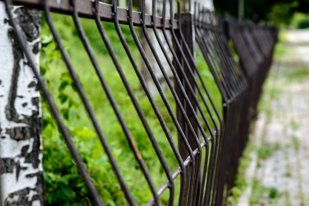 Iron fence in nature.