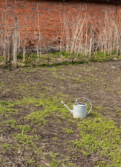 Iron old watering can stands on the ground with grass in the garden, spring gardening
