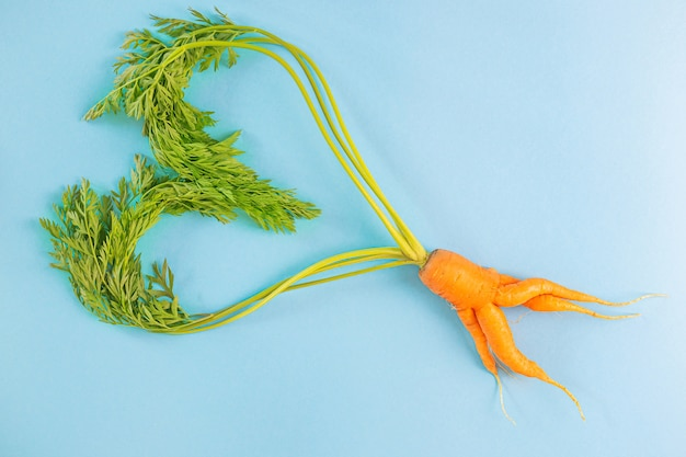 Irregular carrots with heart-shaped leaves