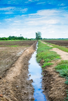 Irrigation canal in a rural tropical rice field.