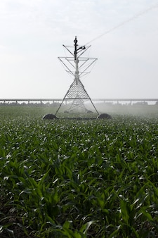 Irrigation of corn field