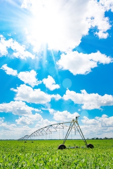 Irrigation of farmland to ensure the quality of the crop. sunny day, sunlight.