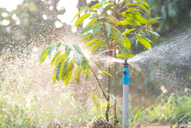Irrigation or irrigation system on agricultural land. function of sprinkle watering agricultural plants.