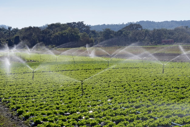 Irrigation system in action in vegetable planting