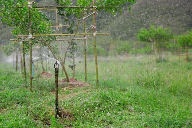 Irrigation system in fruit garden, watering plants
