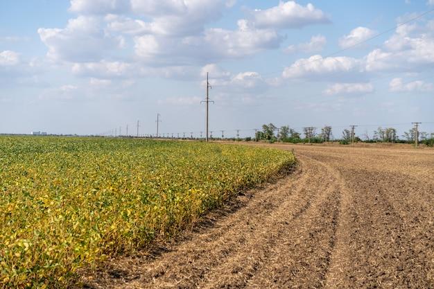 Оросительная система полива сельскохозяйственных культур на фермерском поле. автоматическое распыление воды в сельском хозяйстве