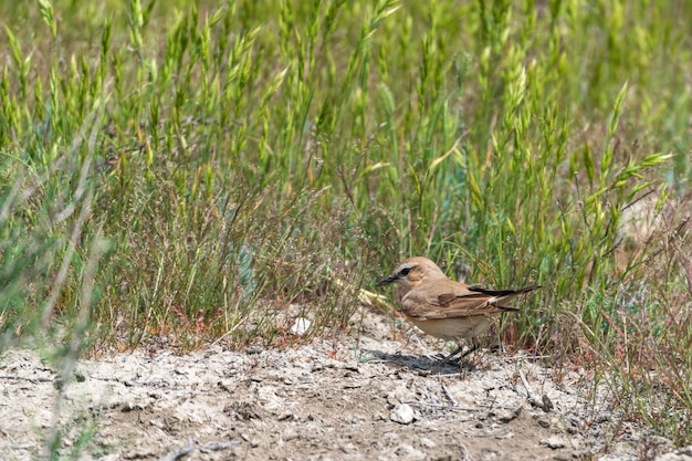 야생의 자연 속에서 이사벨린 밀이어 새