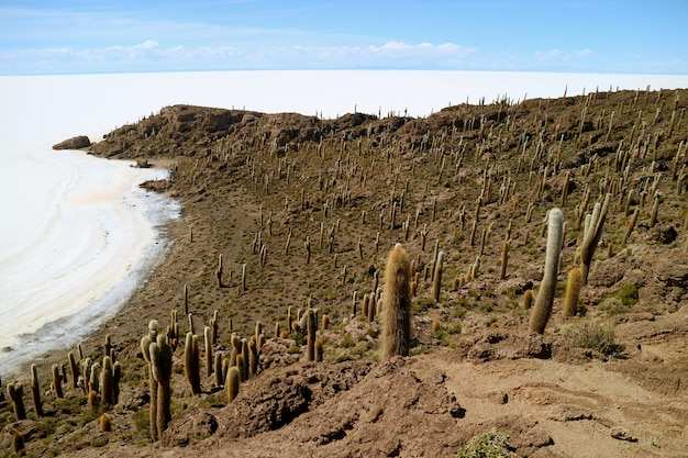 Isca incahuasi(isla del pescado)、ウユニ塩原、ボリビアからの素晴らしい空撮