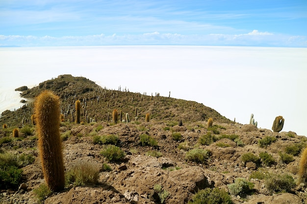 Isla del pescado rocky outcrop filled with trichocereus cactus plants in uyuni salt flats, bolivia