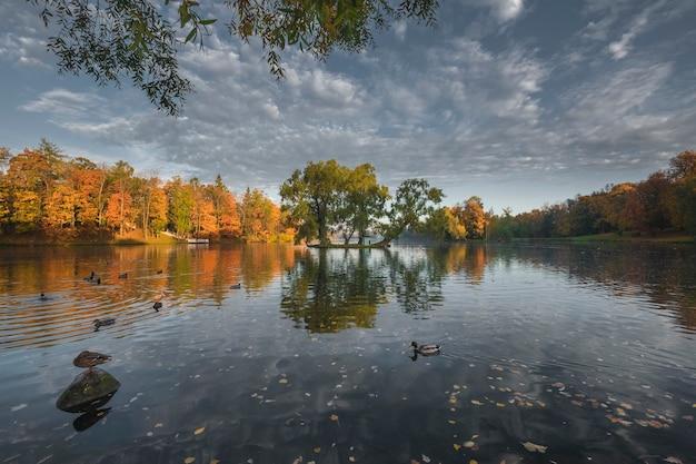 黄金の秋のガッチナ公園の池の島とアヒル