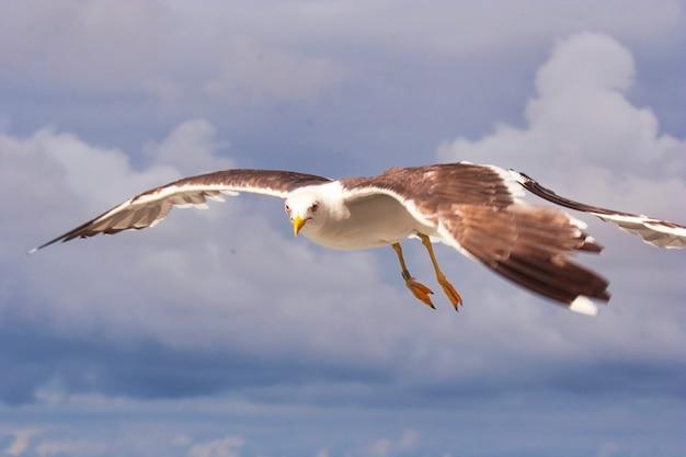 Остров тексель - нидерланды