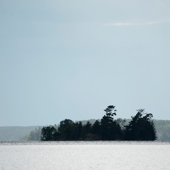 Island of trees, lake of the woods, ontario, canada