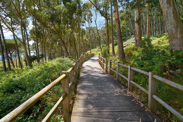 Islas cies島のfigueirasビーチ木滑走路