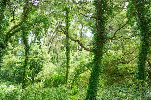 Islas cies islands forest near vigo galicia spain