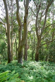 Islas cies諸島の森の近く、vigo galiciaスペイン