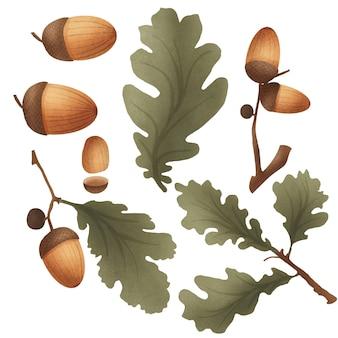 Изолированные желуди с листьями дуба ботанический рисованной набор