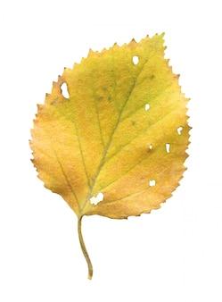 Isolated autumn leave
