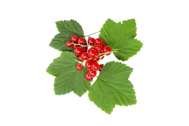 Изолированные ягоды. плоды красной смородины, изолированные на белом фоне.
