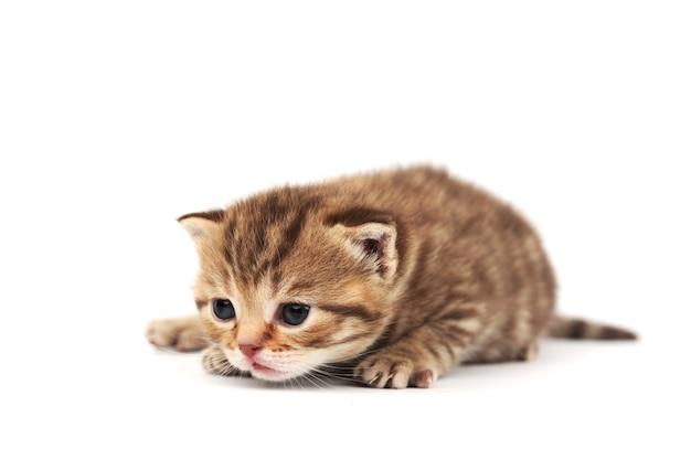 孤立した猫