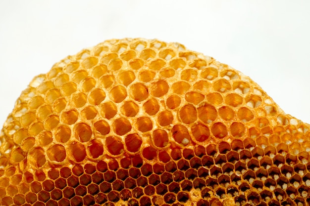 Isolated close-up shots of bees working in honey cells