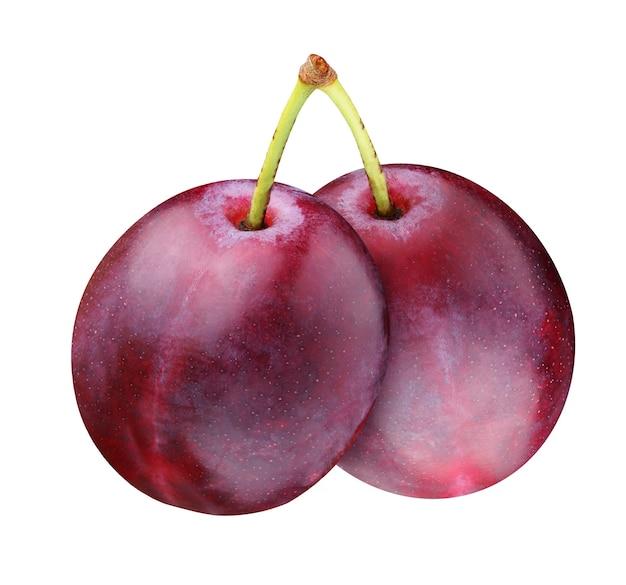 Изолированные водостоки. две целые фиолетовые сливы на одном черешке, изолированные на белом фоне. пара ягод.