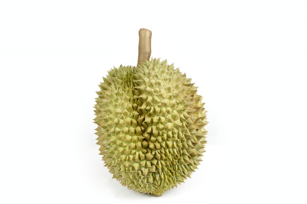 Isolated durian fruit on white background, king of fruit in southeast asian thailand