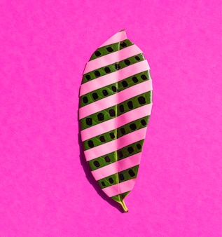 Isolated ficus leaf with pink stripes and pink background