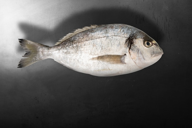 Isolated fish in dark background