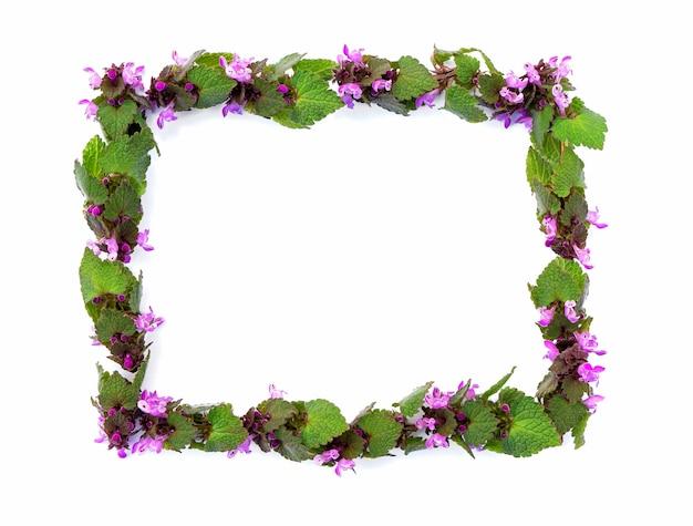 흰색 배경에 분홍색 꽃 직사각형 모양이 있는 스프링 필드 식물에서 격리된 프레임