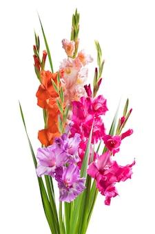 白い壁に分離された休日のデザインのための孤立したグラジオラスの花
