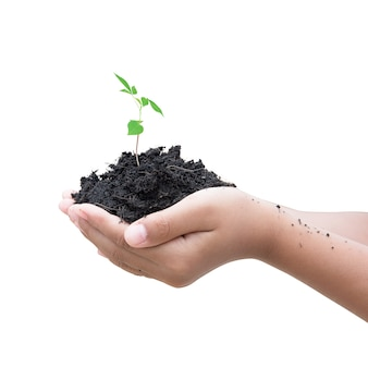 土壌と小さな植物を持っている孤立した手