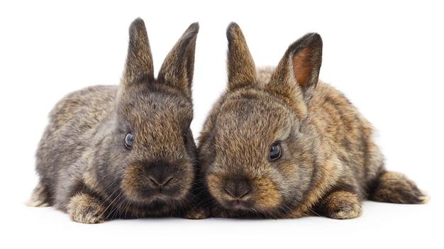 2匹のウサギの孤立した画像