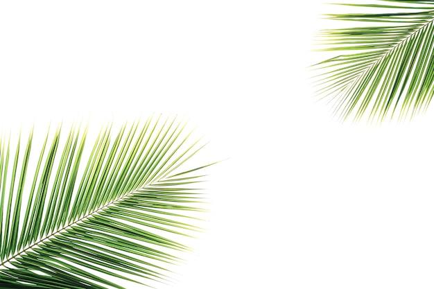 装飾のための白の緑のココナッツの葉の分離。