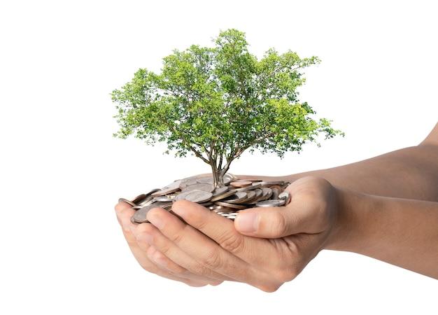 白い背景の上のコインのヒープを保持している両手で木の成長の分離、投資コンセプトのためのお金の節約。