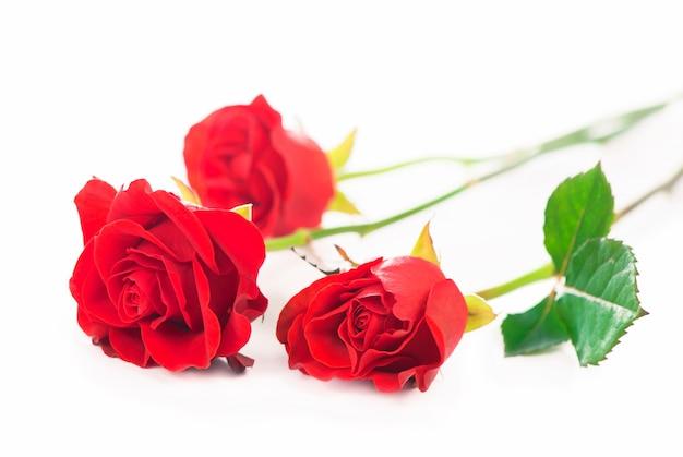 Изолированные красные розы цветок на белом фоне