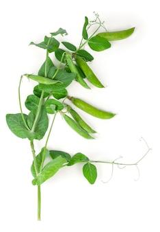 緑の葉と孤立した甘いグリーンピース。