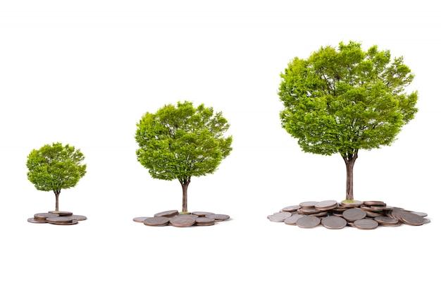 Изолированное дерево накаляя на куче монеток на белой предпосылке. экономия для инвестиций в бизнес с отсечения путь.